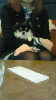 DogCafe(^ε^)-<br />  ☆
